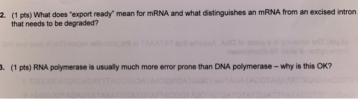 2. (1 pts) What does export ready mean for mRNA and what distinguishes an mRNA from an excised intron that needs to be degr