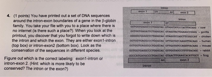 exon1 intron GTA exon 2 Intron 4. (1 points) You have printed out a set of DNA sequences around the intron-exon boundaries of