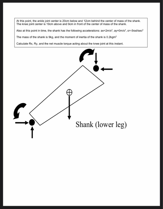 At this point, the ankle joint center is 20cm below and 12cm behind the center of mass of the shark The knee joint center is